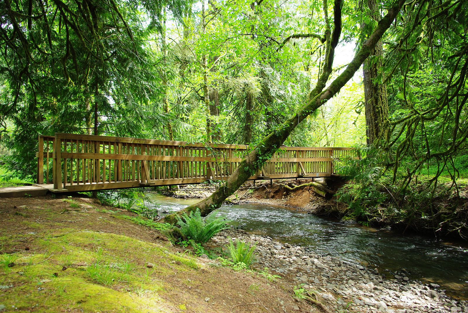 Menefee_County_Park_bridge_-_Yamhill_County,_Oregon